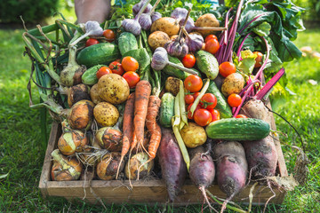 Farmer with vegetables in wooden box, vegetable harvest or garden produce. Organic farming concept. Wall mural