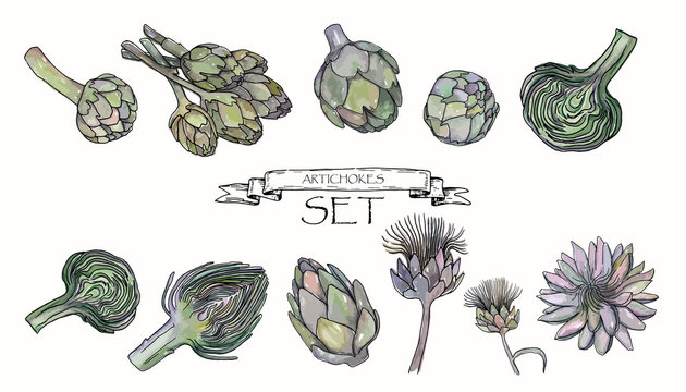 Vector illustration. Pen drawn artichokes with watercolor style background. Vector objects set.