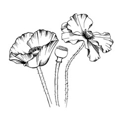 Decorative elements set. Hand drawn vector Line art ink illustration of tree poppy flowers bouquet. Picture frames.