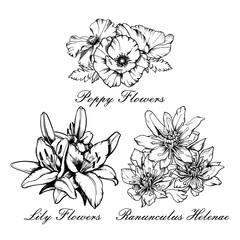 Vector flowers bouquet set Poppy, lily, ranunculus helenae. Hand drawn ink illustration.