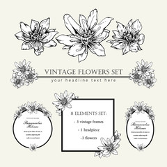 Decorative elements set. Hand drawn vector ink illustration of ranunculus helenae flowers. Picture frames.