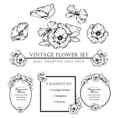 Decorative elements set. Hand drawn vector ink illustration of poppy flowers. Picture frames.
