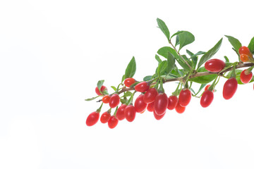 red ripe goji berry on a branch isolated on a white