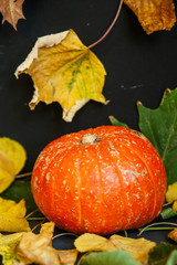 Close-up of pumpkin on leaves on dark background, space for text. Halloween