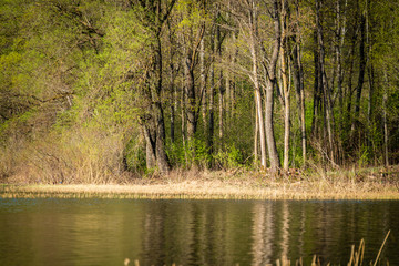 lake shore with grass and trees in spring