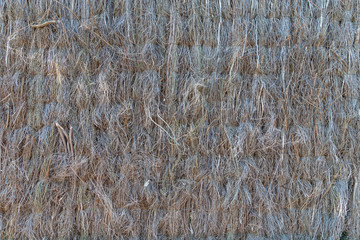 Background from dry straw tied up by threads