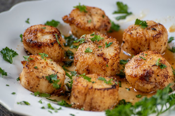 sea scallops on white plate with green herbs on dark background