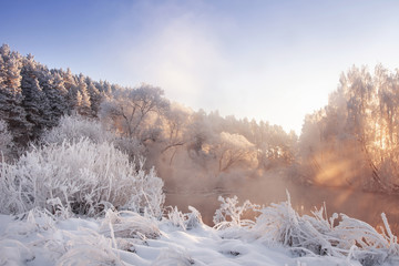 Frosty winter nature landscape in pink morning sunlight. Scenery winter with hoarfrost on trees and plants. Beautiful winter day. Christmas background. Snowy nature.