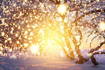 Christmas background with glowing snowflakes. Shining magic lights in winter nature. Scenery winter fairytale.