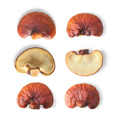 Lingzhi Mushroom Isolated on white background