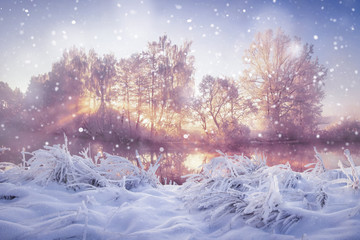Winter nature landscape in snowfall. Snowy and frosty trees in morning sunlight. Christmas background