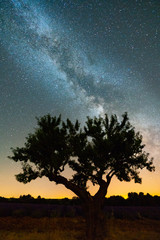 The Milky Way in the night sky with silhouette of olive tree in the foreground, Provence, France