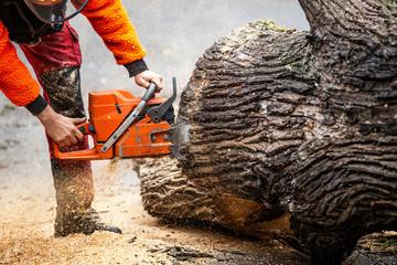 Kettensäge Forst Baum fällen