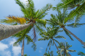 Coconut palm trees on tropical beach with beautiful blue sky