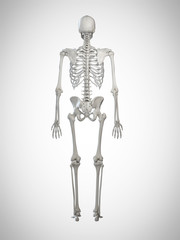 3d rendered medically accurate illustration of a human skeleton