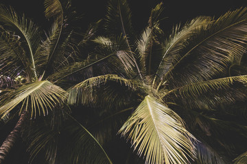 Background of palm tree leaves at night