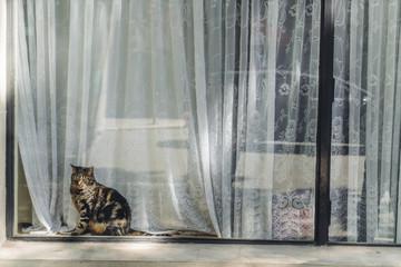Chat de ville derrière une fenêtre, Montmartre, Paris