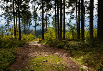 forest path downwards