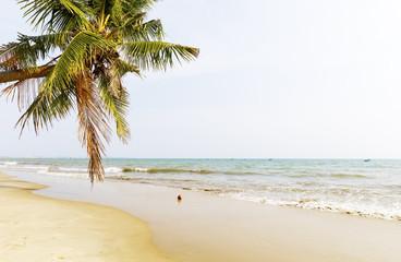 Palm treest at sandy seaside in Vietnam