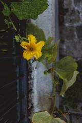 Fleur de ville, Montmartre, Paris