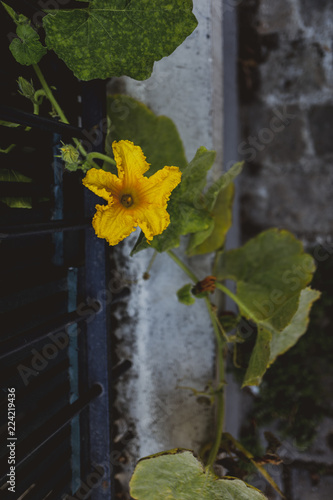 Fleur De Ville Montmartre Paris Stock Photo And Royalty Free
