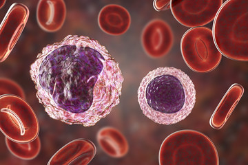 Monocyte (left) and lymphocyte (right) surrounded by red blood cells, 3D illustration