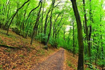 forest of Pálava