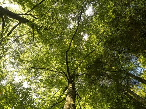 En forêt. Sous la cime des arbres.