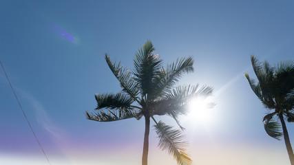 tropical palms landscape