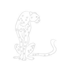 cheetah sits drawing lines, vector