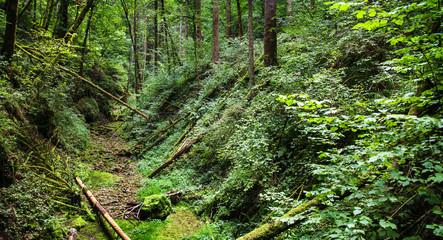 Wald,