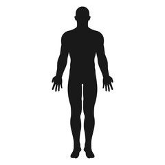Human body. Vector.
