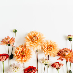 Poster Dahlia Colorful dahlia and cynicism flowers on white background. Flat lay, top view.
