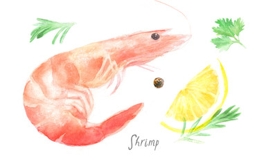 watercolor isolated illustration of shrimp and spices, lemon, rosemary, pepper; seafood on a white background, drawing drawn by hand