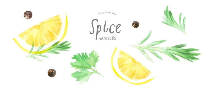 watercolor illustration isolated lemon slices, sprigs of rosemary; parsley, black pepper, drawing drawn by hand, spices on a white background