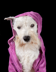 Dog in a hood
