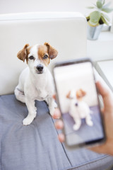 lovely dog captured by a screen on a phone