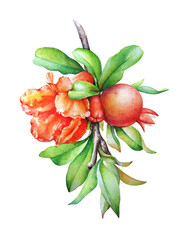 Watercolor hand drawn illustration of the pomegranate tree branch