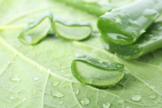 Fresh green aloe vera slices with drops on leaf, closeup