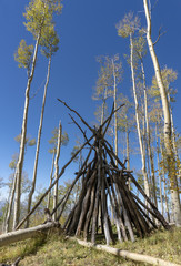 Tepee Frame Surrounded by Fall Aspen Trees