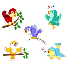 the collection birds with the different color and activities