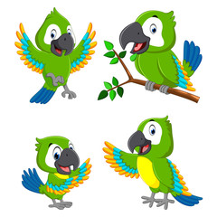 the collection of the green parrots with the different expression