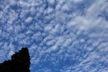 うろこ雲の空