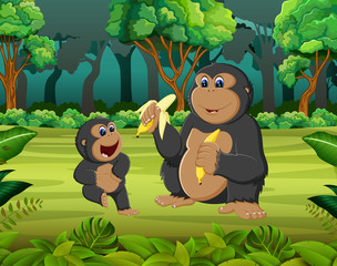 the forest background with two gorilla eating the banana
