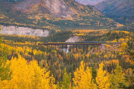A train surrounded by fall color in Alaska