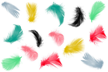 Colorful collection feathers floating in air isolated on white background