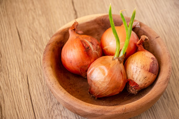 Onions and a growing onion in a small wood bowl on the wooden table