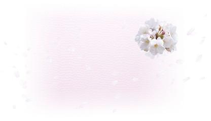Wall Mural - 桜の背景(白と薄いピンクのイメージ)