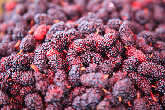 ripe red and dark purple sweet flavor mulberry fruit background. Health benefits of mulberries include, to improve digestion, lower cholesterol, aid in weight loss, prevent cancer, slow down aging