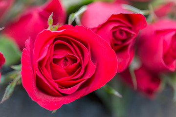 Close-up of red rose with red rose